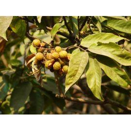 Mýdlové ořechy bio sáček Yellow & Blue 1kg