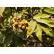 Mýdlové ořechy bio sáček Tierra Verde 1kg