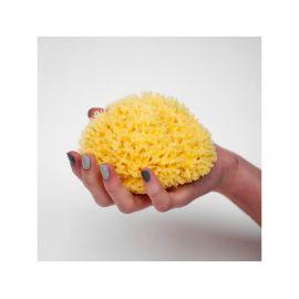 Přírodní mycí mořská houba - Středomořská- S   Förster´s